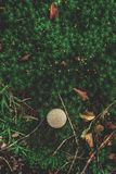 Foto di piccolo fungo nella foresta su muschio verde fotografia stock libera da diritti