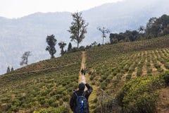 Foto di presa turistica degli agricoltori nel giardino di tè di Temi nell'inverno vicino a Gangtok Il Sikkim, India Fotografie Stock Libere da Diritti