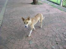 Foto di profilo del marciapiede di camminata del cane fotografia stock
