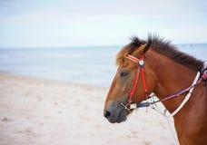 Foto di riserva - cavallo Fotografia Stock Libera da Diritti