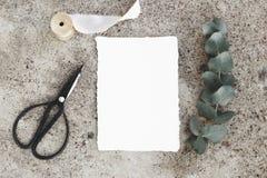 Foto di riserva disegnata femminile, modello della cartolina d'auguri Ramo verde dell'eucalyptus del dollaro d'argento, forbici d Fotografie Stock Libere da Diritti