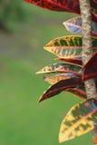 Foto di riserva: foglie di autunno variopinte su un fondo verde Fotografia Stock Libera da Diritti
