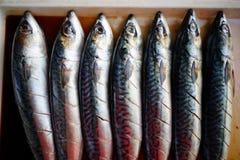 Foto di riserva - il pesce di saba ha fermentato il sale e il suace Immagini Stock Libere da Diritti