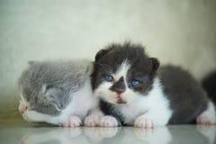 Foto di riserva - sguardo neonato dei gatti Immagini Stock