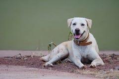 Foto di riserva - un cane si siede su terra Immagini Stock Libere da Diritti