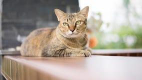 Foto di riserva - un gatto che sembra il fuoco selettivo dell'occhio Fotografia Stock Libera da Diritti