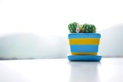 Foto di riserva - vaso del cactus Immagine Stock