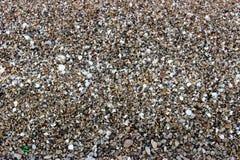 Foto di sabbia di mare mista con i resti delle conchiglie immagine stock