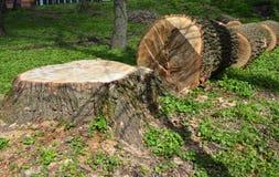 Foto di taglio dell'albero Albero abbattuto Fotografie Stock