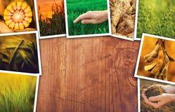 Foto di tema del collage di agricoltura con lo spazio della copia Fotografia Stock