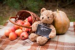 Foto di ultrasuono della tenuta dell'orsacchiotto del bambino, fondo di autunno con il canestro e mele fotografia stock libera da diritti