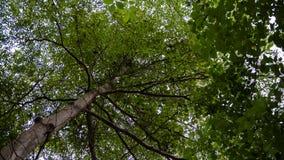 Foto di un albero con luce solare che splende tramite le sue foglie Fotografie Stock Libere da Diritti