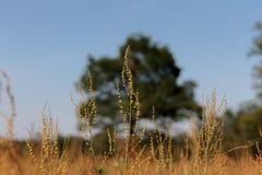 Foto di un albero o di un gruppo di alberi nella distanza Immagine Stock