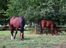 Foto di un cavallo fotografia stock