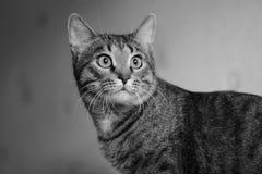 Foto di un gatto Immagine Stock Libera da Diritti