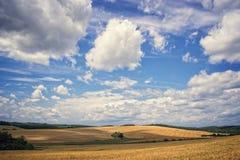 Foto di un giacimento di grano Fotografie Stock