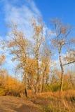 Foto di una foresta di autunno Fotografia Stock Libera da Diritti