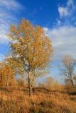 Foto di una foresta di autunno Fotografie Stock Libere da Diritti