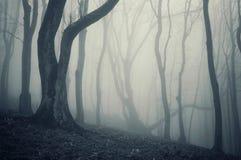 Foto di vecchio albero in una foresta fredda con nebbia fotografia stock