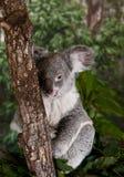 Foto die in Australië wordt genomen Royalty-vrije Stock Foto's