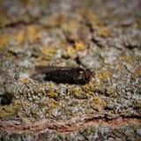 foto die een insect tonen stock fotografie