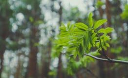 Foto die een macro de lentemening van de boombrunch afschilderen met vet Royalty-vrije Stock Foto's