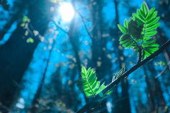 Foto die een macro de lentemening van de boombrunch afschilderen met vet Royalty-vrije Stock Fotografie