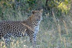 Foto die tijdens de safari in het Nationale park van Serengetti wordt genomen Royalty-vrije Stock Foto's