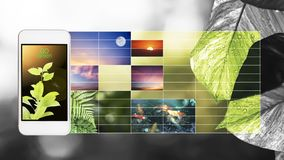 A foto do ambiente verde Fotos de Stock