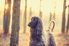 Foto do cão foto de stock royalty free