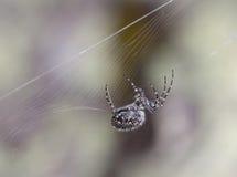 Foto do Close-up da aranha de caça Fotografia de Stock