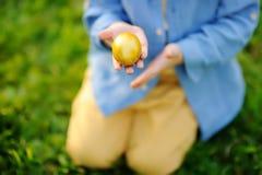 Foto do close-up da caça do rapaz pequeno para o ovo da páscoa no parque da mola no dia da Páscoa Imagem de Stock Royalty Free