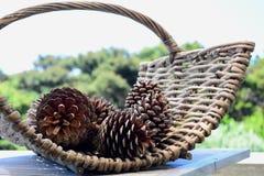 Foto do close-up de cones secos do pinho em uma cesta tecida agradável, pronta para ser usado para uma chaminé imagens de stock