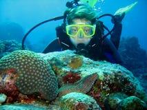 Foto do close up de enguias de moray e de um mergulhador de mergulhador Olham se imagens de stock royalty free