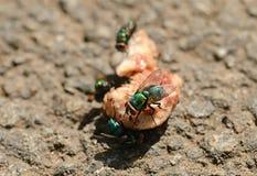 Foto do close up de uma mosca na carne Fotografia de Stock Royalty Free