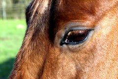 Foto do detalhe do cavalo imagens de stock