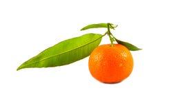Foto do estúdio das tangerinas Fotografia de Stock Royalty Free