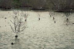 Foto do estilo do vintage de árvores inoperantes no lago inundado para um fundo Phetchaburi, Tailândia Foto de Stock