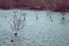 Foto do estilo do vintage de árvores inoperantes no lago inundado para um fundo Phetchaburi, Tailândia Fotografia de Stock Royalty Free