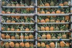 Foto do estoque da maçã do abacaxi no mercado de produto fresco imagem de stock