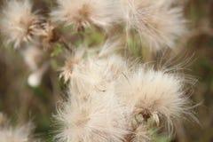 Foto do foco da flor imagens de stock