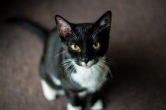 Foto do gatinho Fotos de Stock Royalty Free