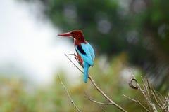 Foto do pássaro fotos de stock royalty free