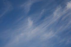 Foto do quadrocopter da floresta conífera no verão foto de stock royalty free