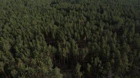 Foto do quadrocopter da floresta conífera no verão fotografia de stock royalty free