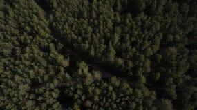 Foto do quadrocopter da floresta conífera no verão fotografia de stock