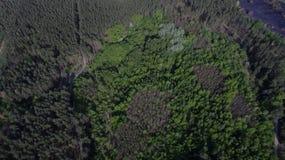 Foto do quadrocopter da floresta conífera no verão imagens de stock