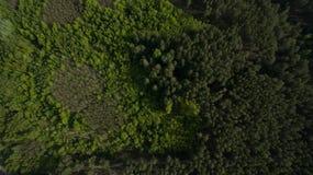 Foto do quadrocopter da floresta conífera no verão imagem de stock