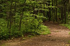 Foto do trajeto de floresta no tempo frio imagem de stock