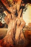 Foto do vintage da árvore velha imagem de stock royalty free